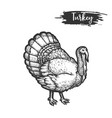 turkey bird sketch or hand drawn gobbler vector image vector image