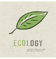 ecology concept green leaf image vector image