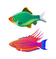 filamented flasher wrasse and green tiger barb vector image vector image