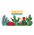 cacti colored background vector image vector image