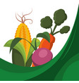 fresh vegetables raw food vector image