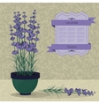 Lavender in a pot on the abstract background vector image vector image