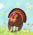 lovely turkey in sunny day vector image