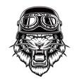 tiger in a biker helmet vector image