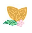 almond nut vector image