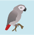 cute african grey parrot vector image vector image