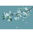branch blossom cherry vector image vector image