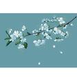 branch blossom cherry vector image