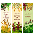cereal grain and vegetable banner of healthy food vector image vector image