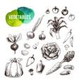 hand drawn vegetables set vintage icons vector image