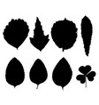 set of silhouettes leaves vector image