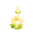 water lily flower floral icon realistic cartoon vector image vector image