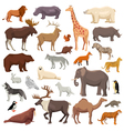Animals Big Set vector image vector image
