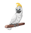 cockatoo alba bird parrot character symbol of vector image