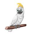 cockatoo alba bird parrot character symbol vector image