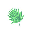 hand drawing palm leaf isolated on white vector image