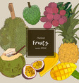 thai-fruits sketch set vector image
