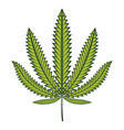 green cannabis marijuana leaf vector image