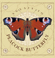 a peacock eye butterfly with open wings vector image