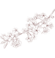 Cherry branch outline vector image