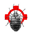 hand drawn bed bug on crosshatch vector image vector image
