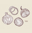 onion hand draw sketch vector image vector image