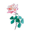 pink rose watercolor love you soo vector image vector image
