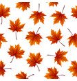 red maple leaves isolated on white background vector image