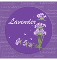Bunch of lavender flowers violet blossom garden vector image vector image