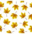 gold maple leaves isolated on white background vector image vector image