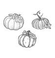 pumpkin set line art sketch vector image