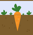 fresh carrot on white background vector image vector image