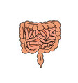 gut human digestive system vector image
