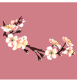 sakura flower on red background vector image vector image