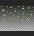 set green tree leaves falling vector image