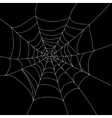 spider web isolated vector image