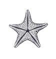 hand drawn ink sketch starfish vector image