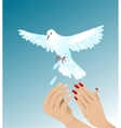 Hands of woman and man setting free white peigeon vector image vector image