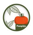 pumpkin vegetable fresh healthy label vector image