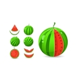 whole and sliced watermelon set vector image