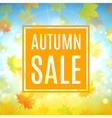 Autumn sale banner with maple leaves vector image vector image