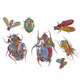 set ethnic insects vector image