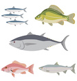 Set of difference kind of fish river and sea food vector image