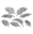 tropical set palm leaves vector image vector image