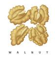 walnut nuts square icon cartoon vector image