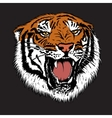 Angry tiger is growling vector image vector image