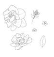 stock line botanic flowers vector image