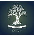Branches on tree with olive oil berry vector image vector image