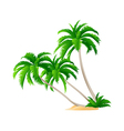 icon palm tree vector image vector image