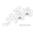 orchid flowers frame vector image vector image